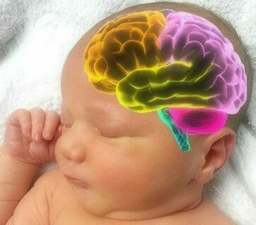 brein stimuleren